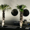 new palm 20